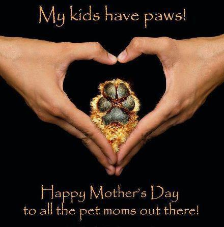 happy-mothers-day-to-pet-moms