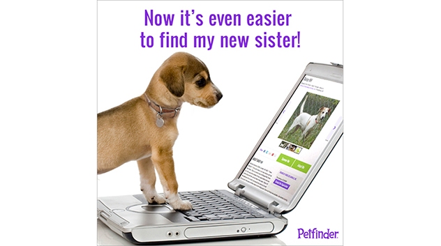 dog-new-search-launch-new-sister-632p